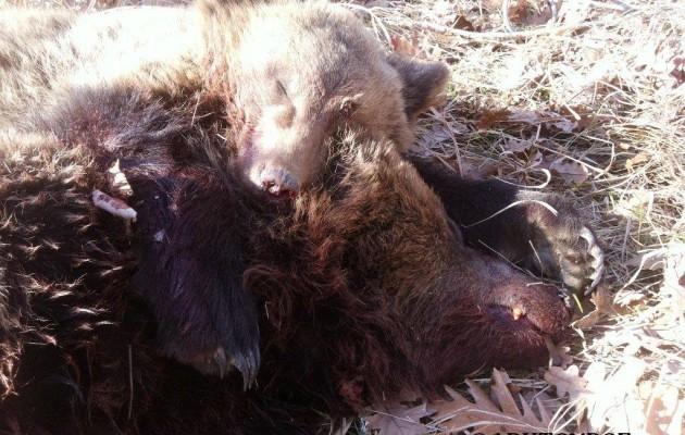Συγκίνηση από τη φωτογραφία με το νεκρό αρκουδάκι να αγκαλιάζει τη σκοτωμένη μητέρα του!