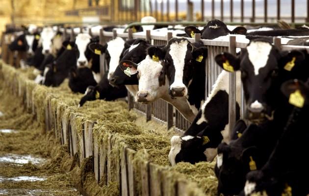Οι τρελές αγελάδες επιστρέφουν – Δύο κρούσματα στη Φθιώτιδα