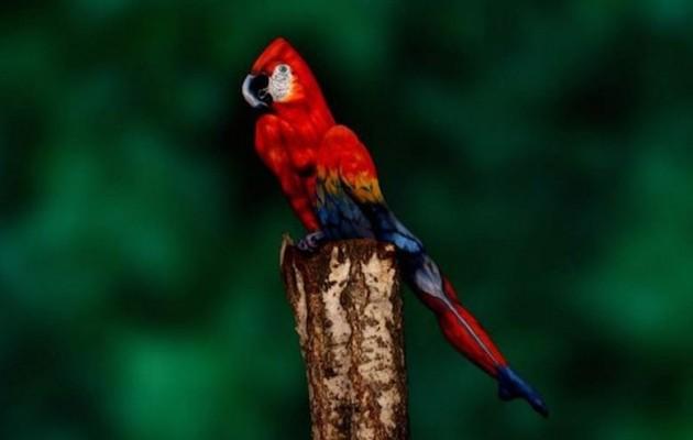 Οφθαλμαπάτη: Αυτός ο παπαγάλος είναι… γυναίκα (φωτογραφίες)