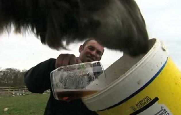 Γνωρίστε την καμήλα που λατρεύει την μπύρα (βίντεο)