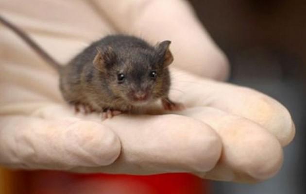 Χανιά: Θρήνος για τον 20χρονο που πέθανε μετά από επαφή με ποντίκι