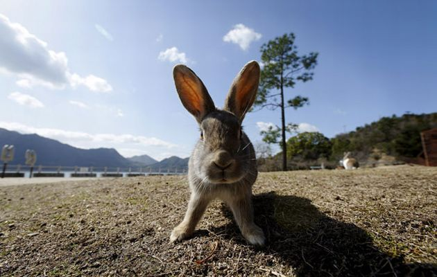 Okunoshima: Το νησί των κουνελιών