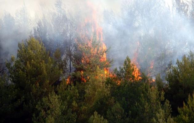 Μεγάλη φωτιά σε πευκοδάσος στην Μαλεσίνα