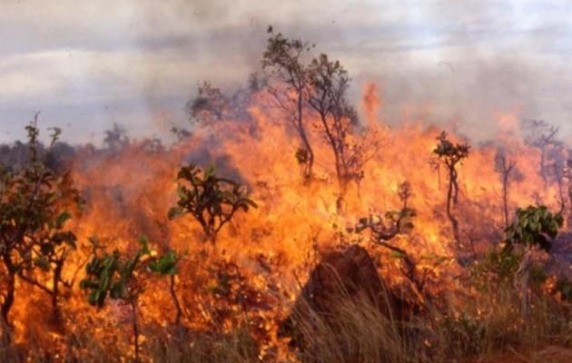 Μυτιλήνη: Φωτιά σε δάσος κοντά στο αεροδρόμιο