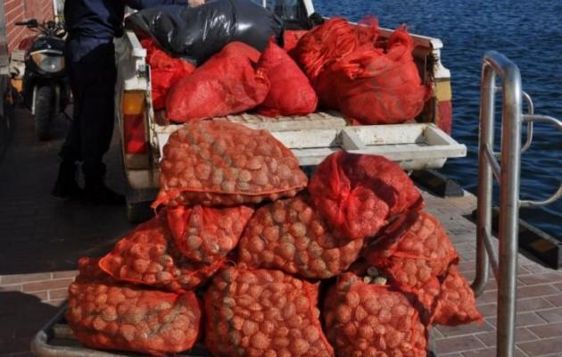 Παραλίγο να διοχετευτεί στην αγορά 1,5 τόνος επικίνδυνα όστρακα