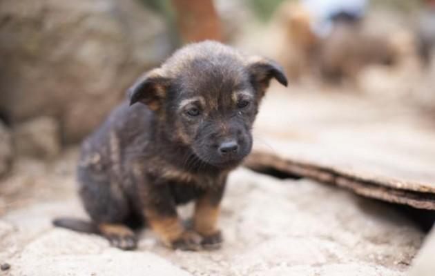 1,3 εκατ. ευρώ στους δήμους για τα αδέσποτα ζώα