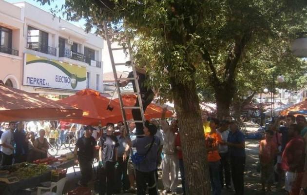 Φίδι σκόρπισε τον πανικό σε λαϊκή αγορά στα Τρίκαλα (βίντεο)