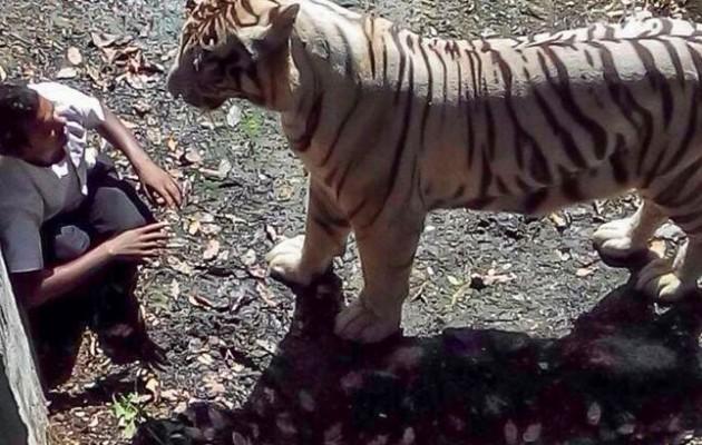 Νέο βίντεο σοκ από την τίγρη που κατασπάραξε τον μαθητή