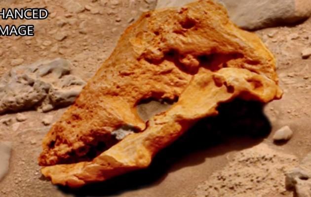 Χαμός με κρανίο εξωγήινου δεινόσαυρου στον Άρη (βίντεο)