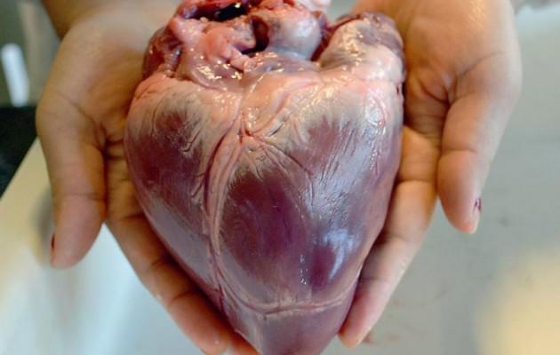 Γιατί δεν εμφανίζεται καρκίνος στην καρδιά