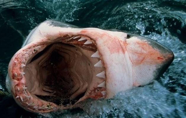 Καρχαρίας έφαγε Γερμανό στην Αίγυπτο