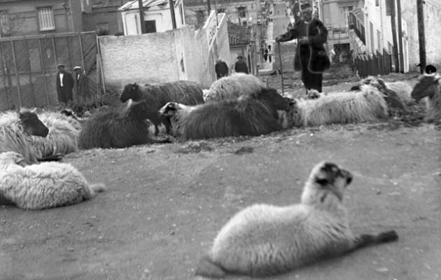 Αθήνα 1920 – Δεν μπορείς να φανταστείς που έβοσκαν αυτά τα πρόβατα
