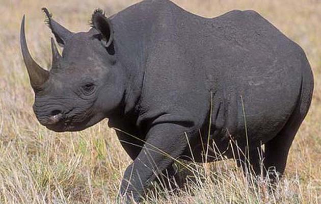 «Έσκασε» 350.000 δολάρια και σκότωσε απειλούμενο μαύρο ρινόκερο