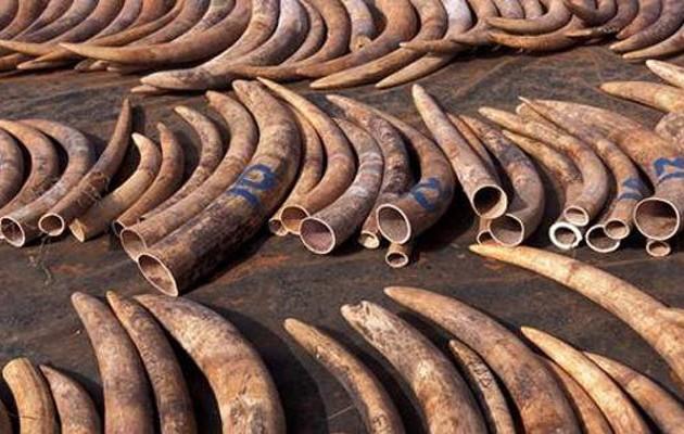 Κατάσχεση χιλιάδων ζώων σε επιχείρηση κατά του λαθρεμπορίου (φωτογραφίες)