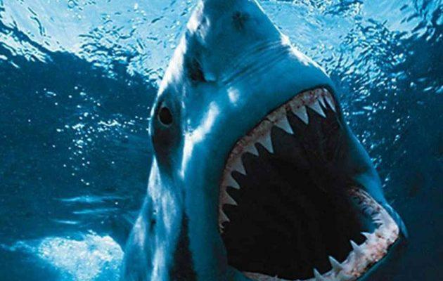 Οι καρχαρίες παραλίγο να εξαφανιστούν από μυστηριώδες γεγονός