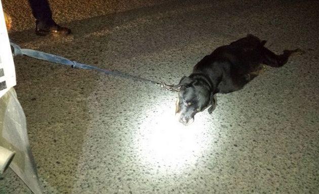 Συνελήφθη 69χρονος που έδεσε και έσερνε σκύλο πίσω από το φορτηγό του