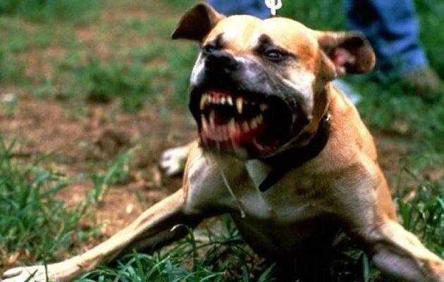 Καρδίτσα: Σκυλιά τραυμάτισαν 3 κορίτσια – Επιτέθηκαν και στη μητέρα και τη γιαγιά τους
