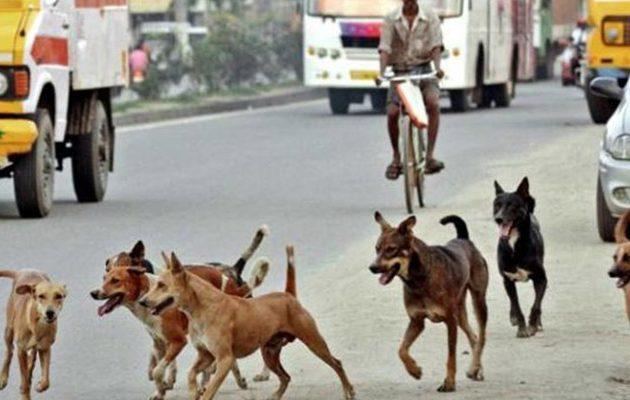 Εκατό αδέσποτα σκυλιά κατασπάραξαν  65χρονη στην Ινδία