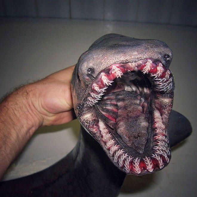 Τα απόκοσμα πλάσματα του Αρκτικού που σκορπούν τρόμο (φωτο και ...