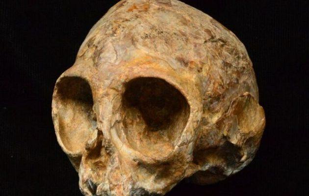 Ανακαλύφθηκε κρανίο 13 εκατ. ετών από κοινό πρόγονο πιθήκων και ανθρώπων