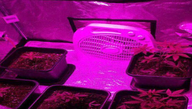 Απίστευτος: Σε ποιό σημείο μέσα στο σπίτι του, καλλιεργούσε κάνναβη – Βίντεο της ΕΛΑΣ
