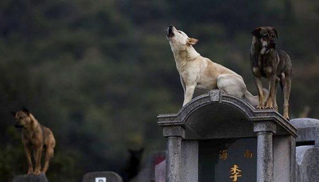 Απίστευτο: 200.000 σύριγγες με ναρκωτικά στην Κίνα προορίζονταν για αδέσποτα σκυλιά