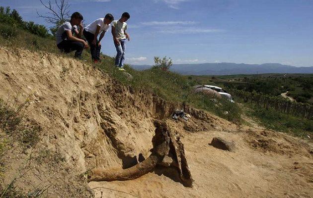 Βρέθηκε «γίγαντας» προϊστορικός ελέφαντας 8 εκατομμυρίων ετών στα Σκόπια