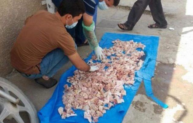 Με φόλες «έλυσαν» το πρόβλημα των αδέσποτων στην επαρχία Ντιγιάλα του Ιράκ (φωτο)