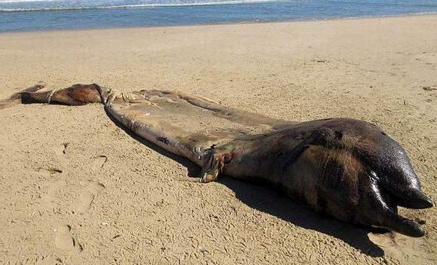 Χωρικοί στη Ναμίμπια έπαθαν «τρόμο» από «απόκοσμο» κουφάρι θαλάσσιου πλάσματος