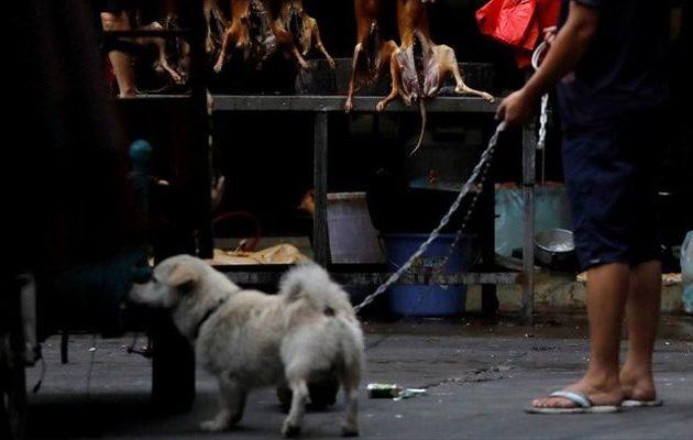 H Νότια Κορέα απαγόρευσε να σφάζονται σκύλοι για το κρέας τους – «Μπορείτε όμως… να τους τρώτε»