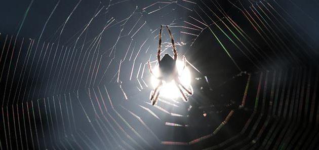 Τρόμος στην Ηλεία για τσιμπήματα μαύρης αράχνης – Πέντε άνθρωποι στο νοσοκομείο