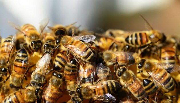 Τραγικό: Μέλισσες απελευθερώθηκαν σε τροχαίο και σκότωσαν ψαρά