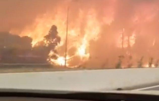 Μεγάλη κινητοποίηση για το πύρινο μέτωπο στην Κινέτα – Εκκενώθηκαν οικισμοί (βίντεο+φωτο)