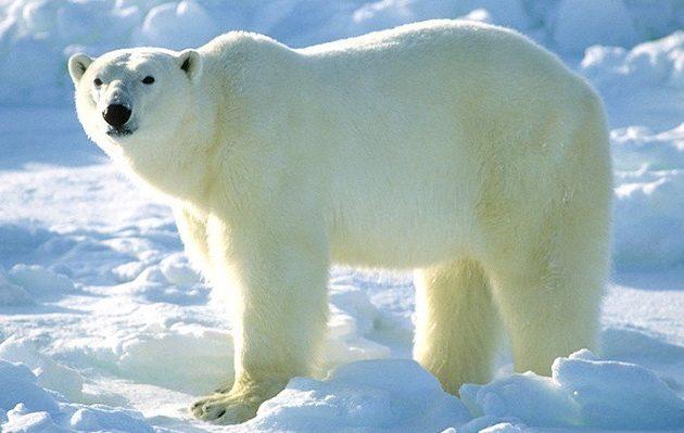 αρκούδες πορνό καλύτερο δωρεάν κινητό γκέι πορνό
