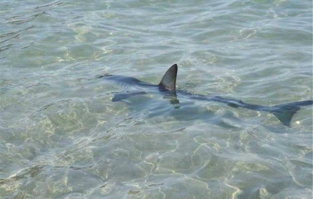 Κρήτη: Καρχαρίας βγήκε σε παραλία και κατατρόμαξε τους λουόμενους (βίντεο)