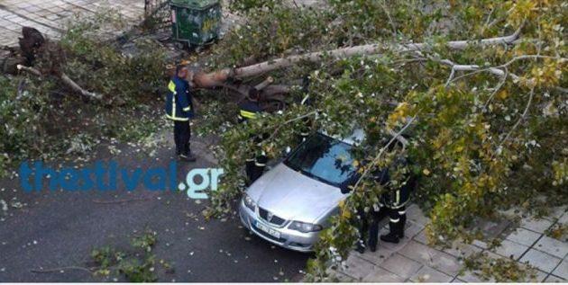 Ο «Ξενοφών» θεριεύει: Ξεριζώθηκαν δέντρα, καταπλακώθηκαν αυτοκίνητα στη Θεσσαλονίκη (φωτο)