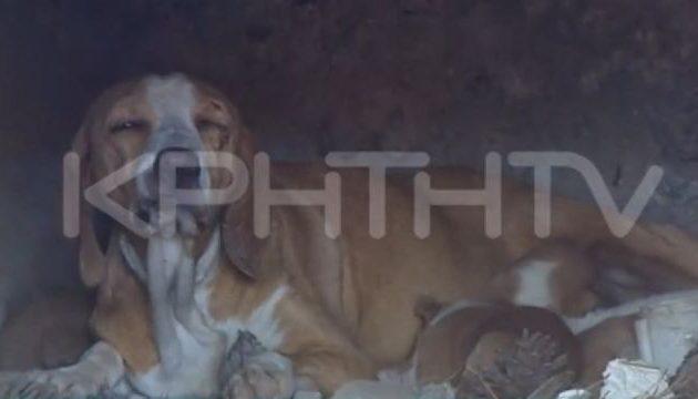 Πραγματική κτηνωδία: Τη «σφράγισαν» με τα κουτάβια της σε φούρνο και άναψαν φωτιά (βίντεο)