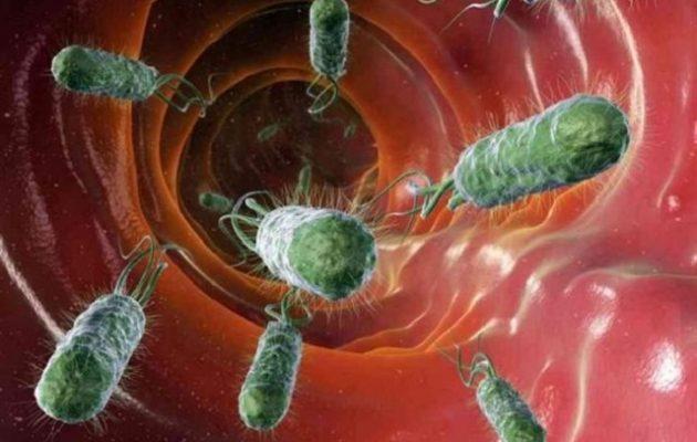 Βακτήρια του εντέρου μπορούν να παράγουν ηλεκτρικό ρεύμα