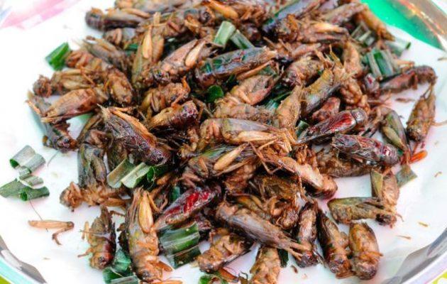 Ο ΟΗΕ συνιστά στους Ευρωπαίους να τρώνε έντομα – Γρύλους για σνακ στα σούπερ μάρκετ στη Βρετανία