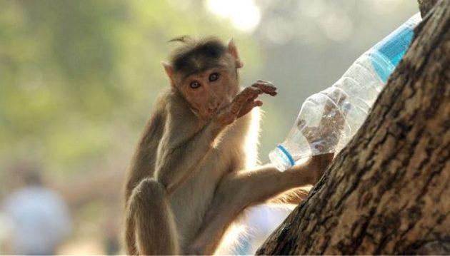 Αδιανόητο: Μαϊμού εισέβαλε σε σπίτι, άρπαξε βρέφος και το σκότωσε