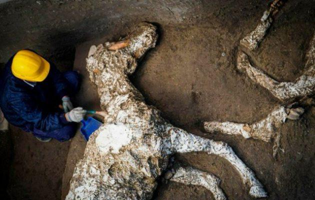 Οι αρχαιολόγοι βρήκαν στην Πομπηία καλά διατηρημένο άλογο που φορούσε την ιπποσκευή του