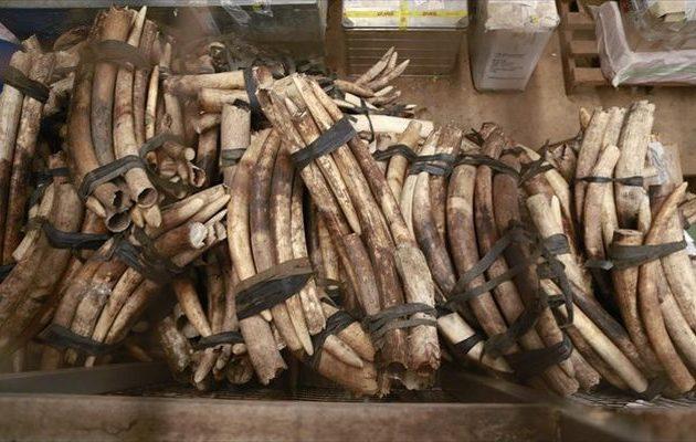 Ο έλεγχος του νομίμου εμπορίου ελεφαντόδοντου διχάζει τις χώρες Ευρώπης-Αφρικής