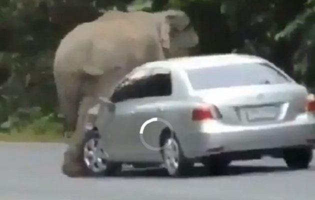 Εξαγριωμένος ελέφαντας διαλύει αυτοκίνητο σε 45 δευτερόλεπτα (βίντεο)