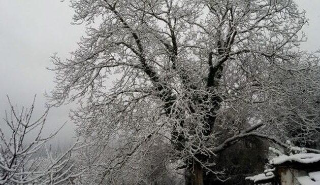 Χιόνισε στα Τρίκαλα – Έως και 30 εκατοστά το ύψος του χιονιού