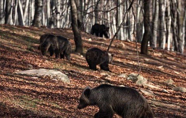 Ξύπνησαν από τη χειμερία νάρκη οι αρκούδες του Αρκτούρου στο Νυμφαίο