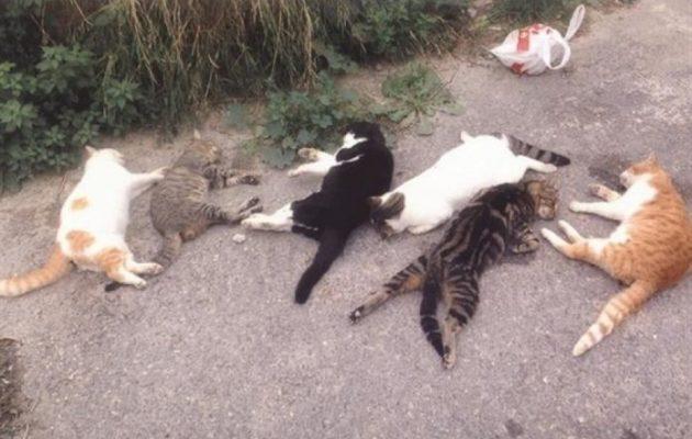 Οργή για την Κρητικιά που σκοτώνει γάτες και δίνει συνταγή για φόλες μέσω Facebook