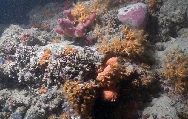 Βρέθηκε ο πρώτος κοραλλιογενής ύφαλος στη Μεσόγειο – Πού τον εντόπισαν