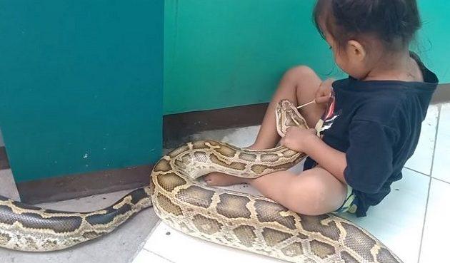 Απίστευτο: Τρίχρονη κάνει την οδοντίατρο σε ένα τεράστιο φίδι (βίντεο)