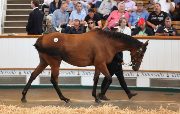 Racing Post: Οι ελληνικές ιπποδρομίες επιστρέφουν από την άβυσσο – Δυναμική παρουσία Ελλήνων επενδυτών στη δημοπρασία του Tattersalls
