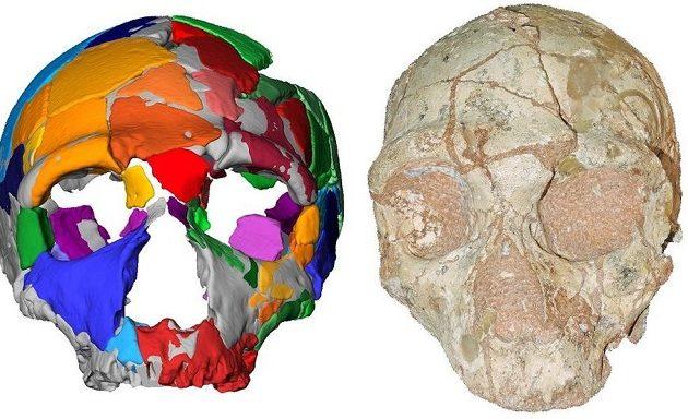 Το αρχαιότερο δείγμα Homo Sapiens είναι ένα κρανίο που βρέθηκε στην Ελλάδα